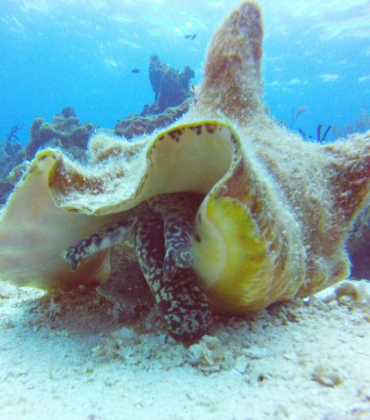 padi scuba diver course scubamobile dive center padi scuba diver course