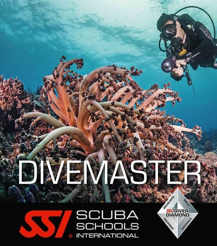 Coral reef bed with pink soft coral and in the background a scuba diver holding a dive light midwater and the title DIVEMASTER over the image.